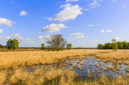Nationaal Park Dwingelderveld, Dwingeloo, Drenthe, Nederland, Europa, Nationaal Park Dwingelderveld