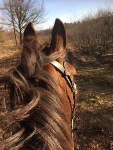 vakantie met paard