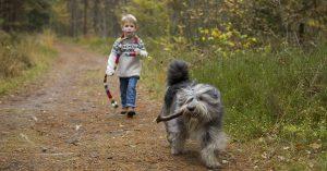 de Bosuil herfstvakantie met hond in Drenthe