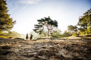 vakantie met paard in Drenthe
